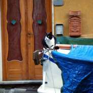 Watchful kitty in Cinque Terre