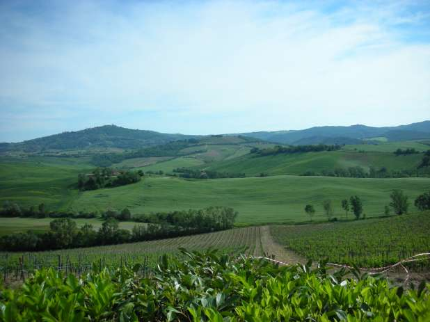 Tuscany wine country view